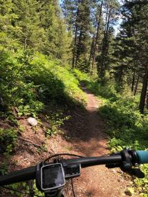 So many trail- I could ride way too long here!